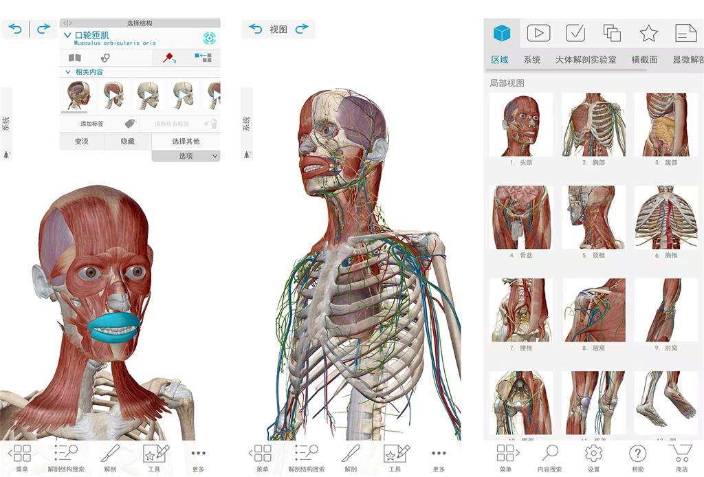2021人体解剖学图谱v0.16付费/专业/高级/SVIP版